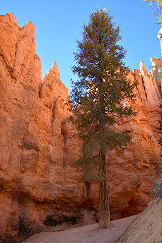 Bryce Canyon Hiking Trail 2018-10-30