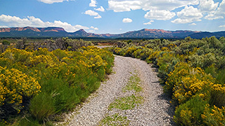 Off Grid Cabin - August Yellow Sage Brush Driveway